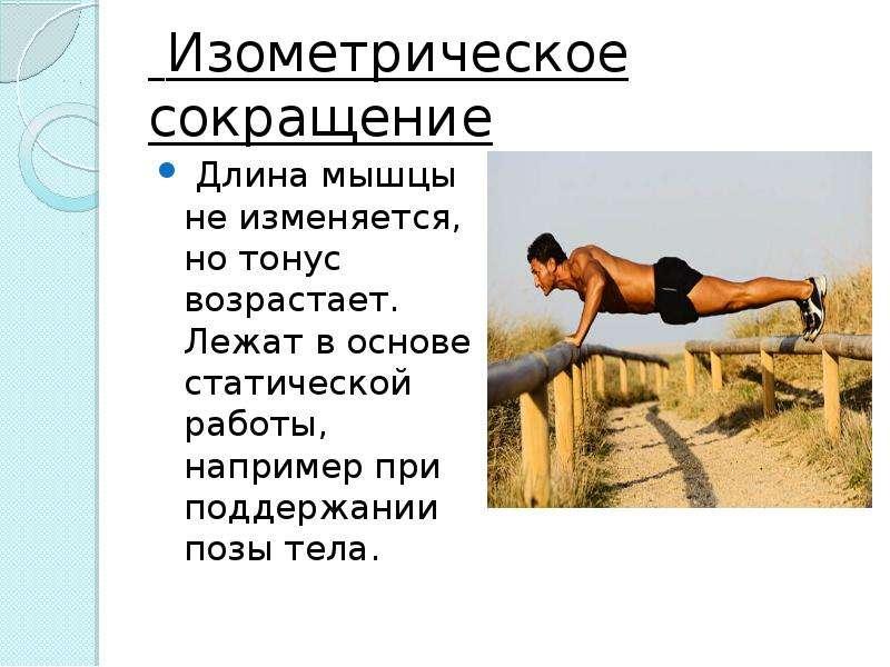 Изометрическое сокращение Длина мышцы не изменяется, но тонус возрастает. Лежат в основе статической