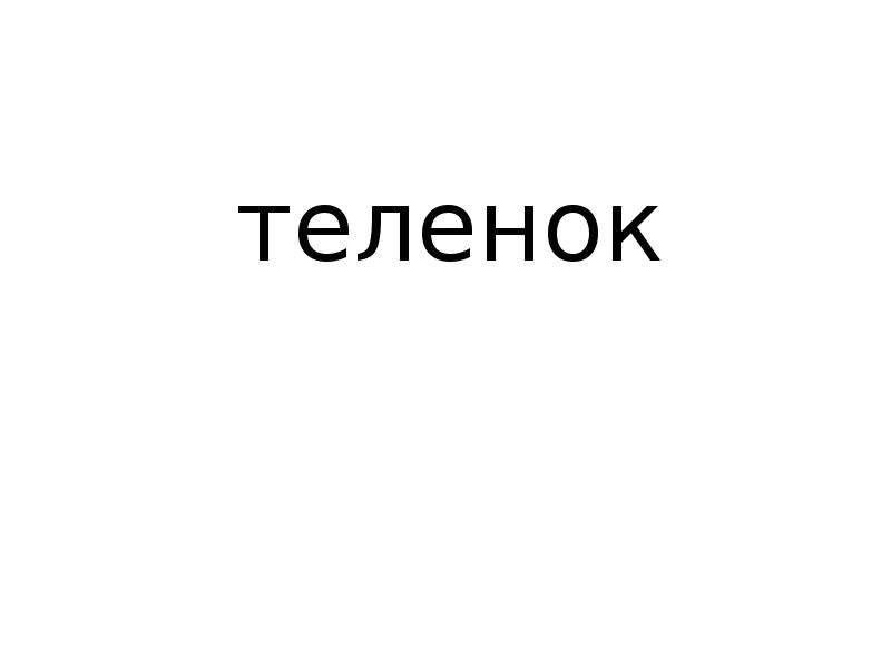 теленок
