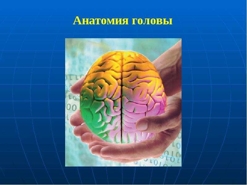 Анатомия головы Анатомия головы