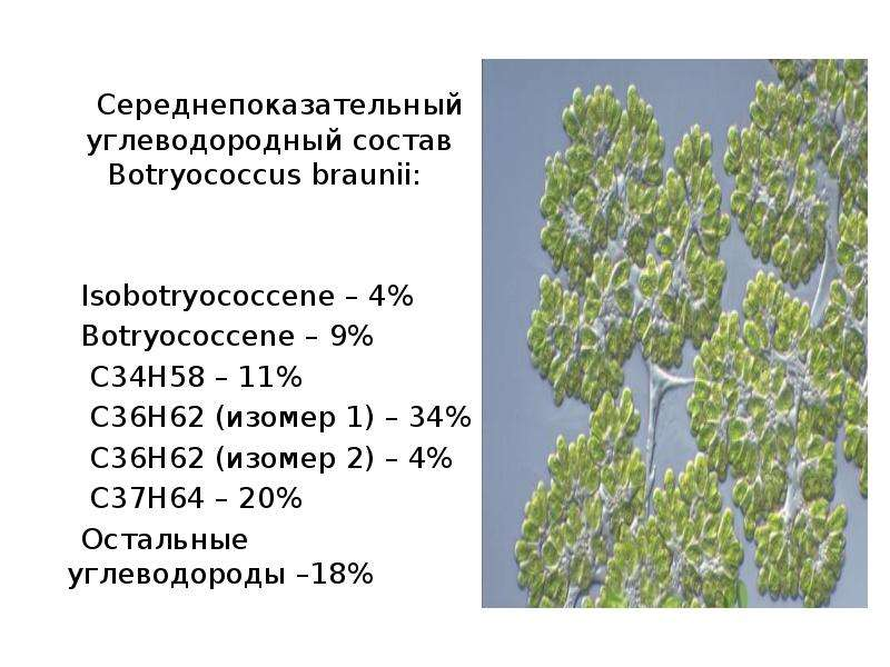 Середнепоказательный углеводородный состав Botryococcus braunii: Isobotryococcene – 4% Botryococcene