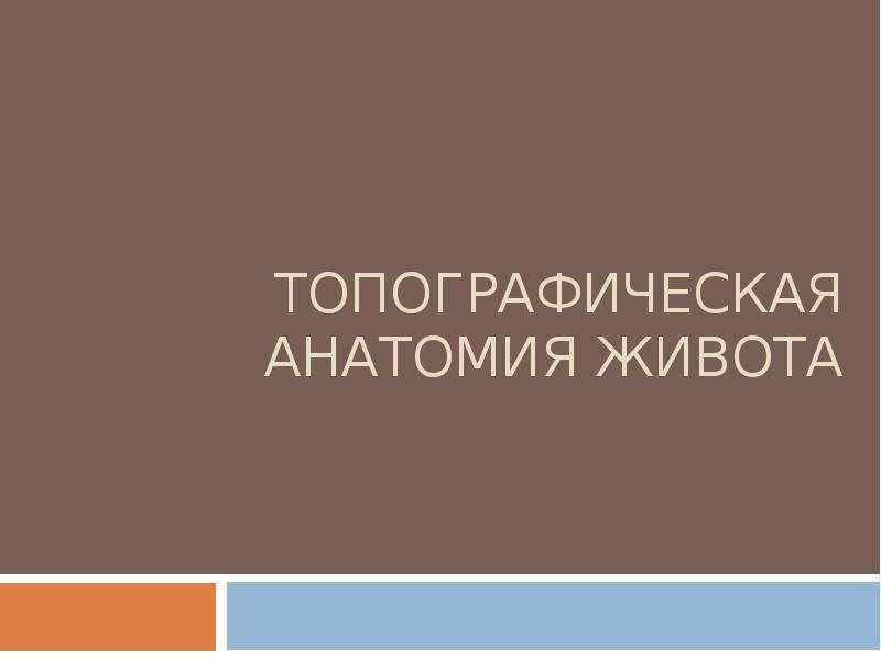 Презентация Топографическая анатомия живота