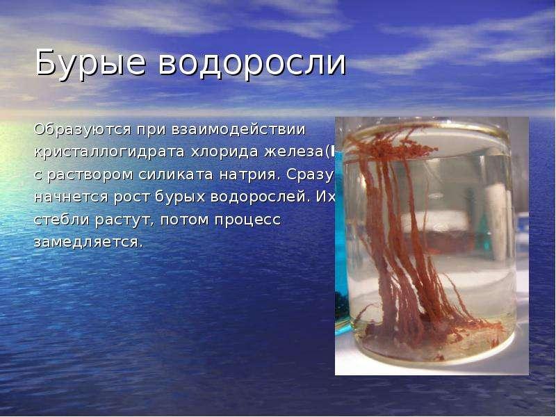 Бурые водоросли Образуются при взаимодействии кристаллогидрата хлорида железа(III) с раствором силик