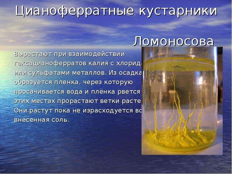 Цианоферратные кустарники Ломоносова Вырастают при взаимодействии гексацианоферратов калия с хлорида