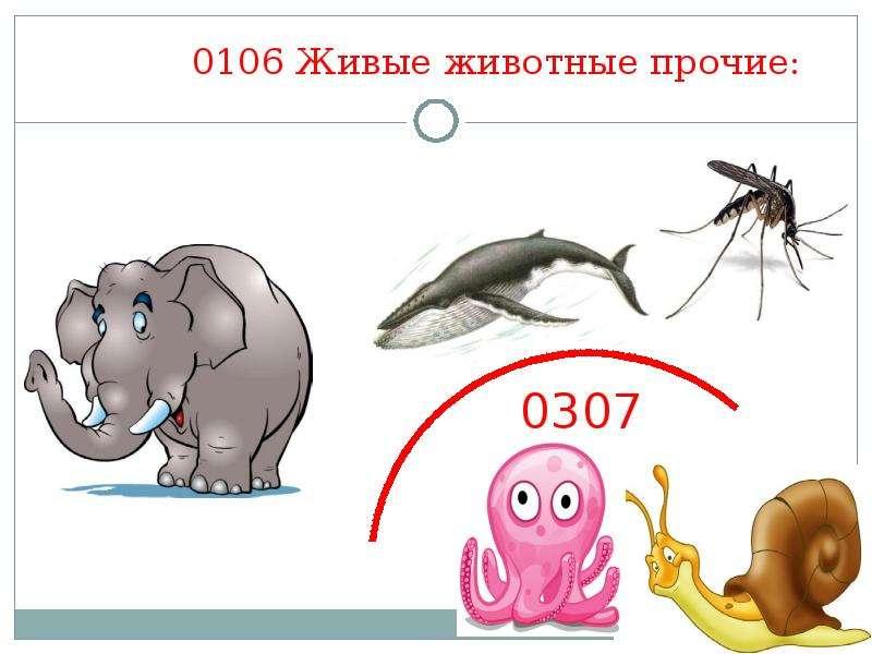 0106 Живые животные прочие: