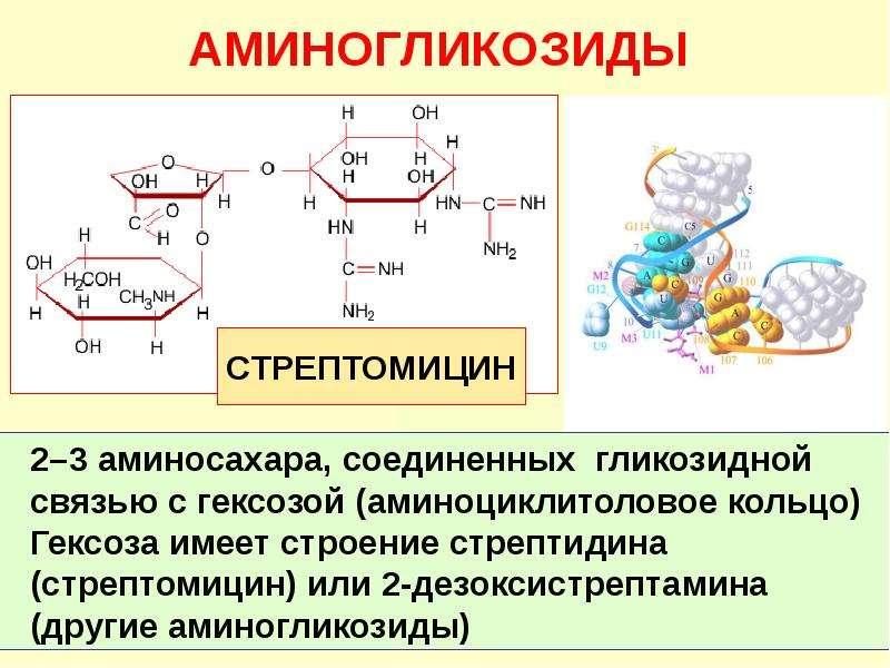 Антибиотики. Классификация антибиотиков по механизму действия, слайд 18