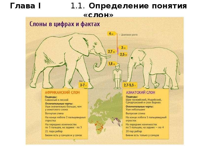 Глава I 1. 1. Определение понятия «слон»