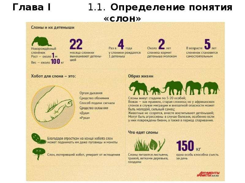 Образ слона в культуре разных народов, слайд 4