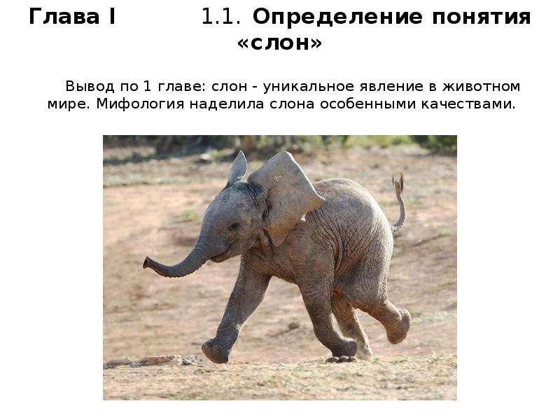Вывод по 1 главе: слон - уникальное явление в животном мире. Мифология наделила слона особенными кач