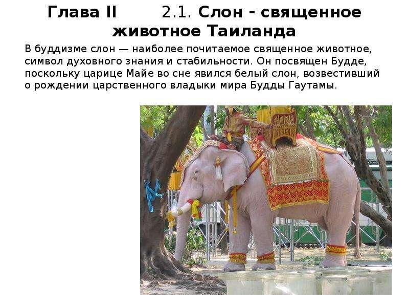В буддизме слон — наиболее почитаемое священное животное, символ духовного знания и стабильности. Он