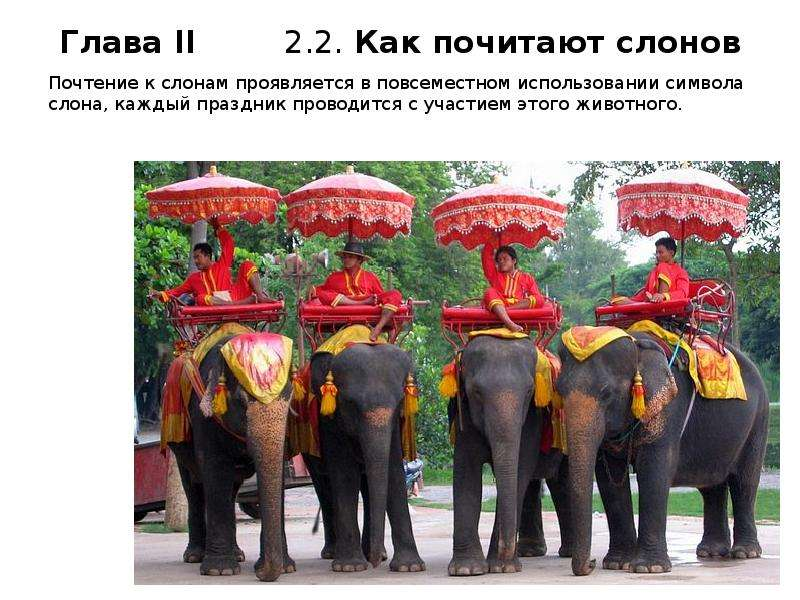 Почтение к слонам проявляется в повсеместном использовании символа слона, каждый праздник проводится