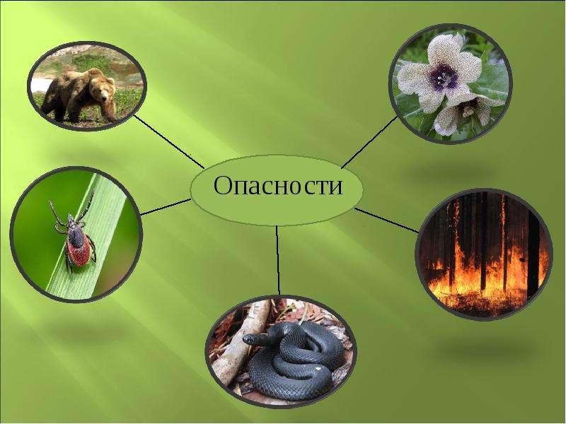 Лесные опасности в картинках