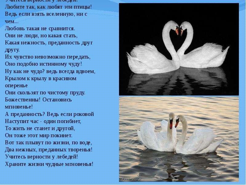 один минералов, поздравление молодоженов с мотивом лебедей единожды женщина