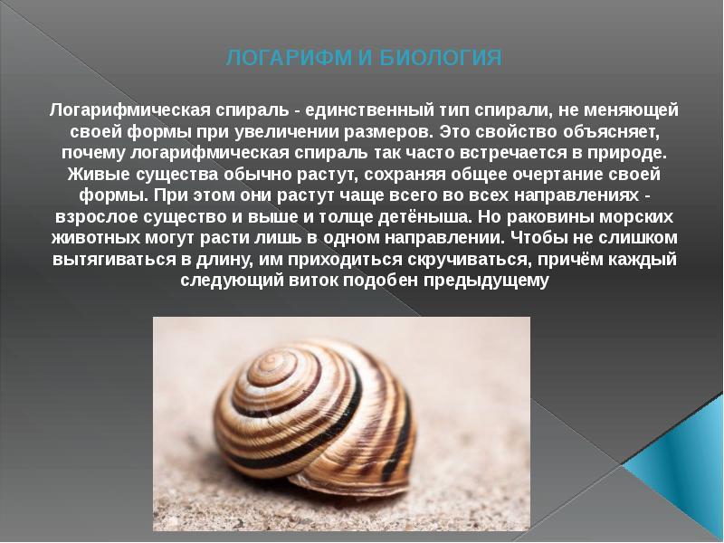 ЛОГАРИФМ И БИОЛОГИЯ Логарифмическая спираль - единственный тип спирали, не меняющей своей формы при
