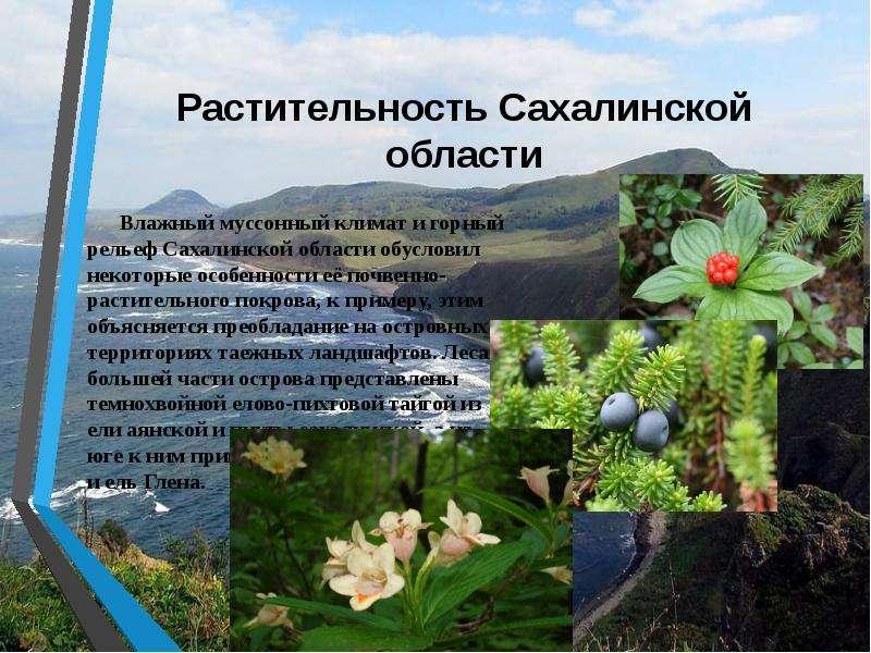 Растительность Сахалинской области Влажный муссонный климат и горный рельеф Сахалинской области обус
