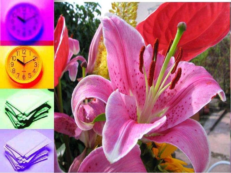 Невербальные средства общения. Язык цветов, слайд 13