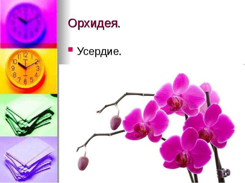 Орхидея. Усердие.