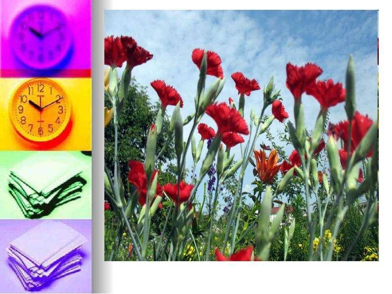 Невербальные средства общения. Язык цветов, слайд 8