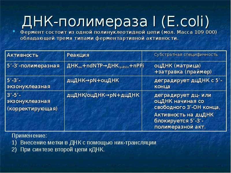 ДНК-полимераза I (E. coli) Фермент состоит из одной полинуклеотидной цепи (мол. Масса 109 000) облад