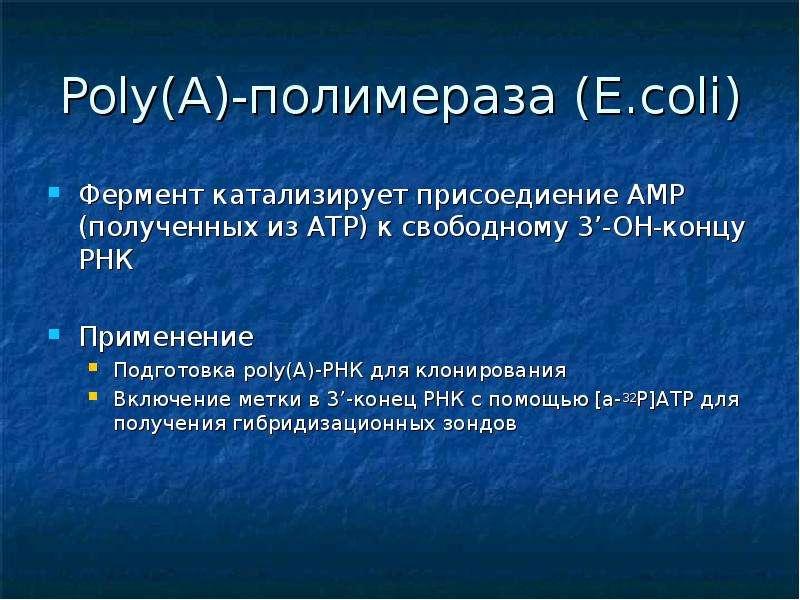 Poly(A)-полимераза (E. coli) Фермент катализирует присоедиение АМР (полученных из АТР) к свободному