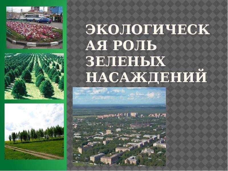 Презентация Экологическая роль зеленых насаждений