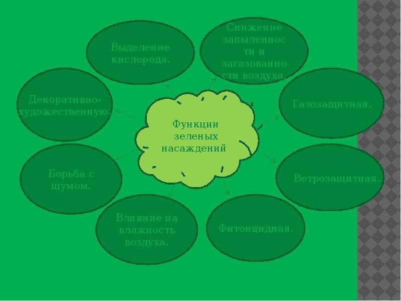 Экологическая роль зеленых насаждений, рис. 2