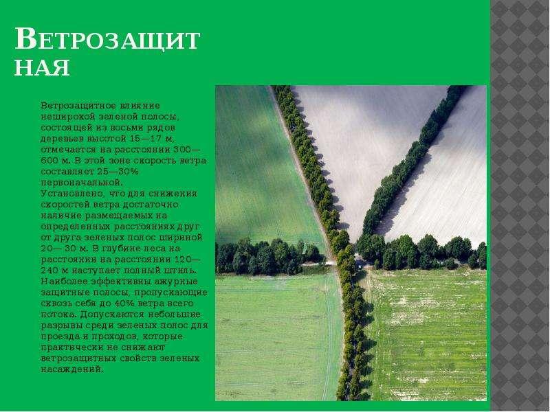 Ветрозащитная Ветрозащитное влияние неширокой зеленой полосы, состоящей из восьми рядов деревьев выс