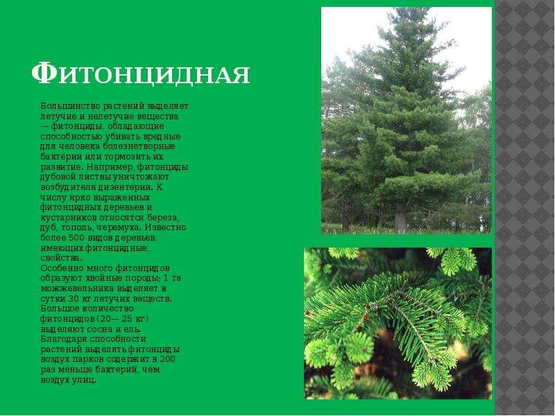Фитонцидная Большинство растений выделяет летучие и нелетучие вещества — фитонциды, обладающие спосо
