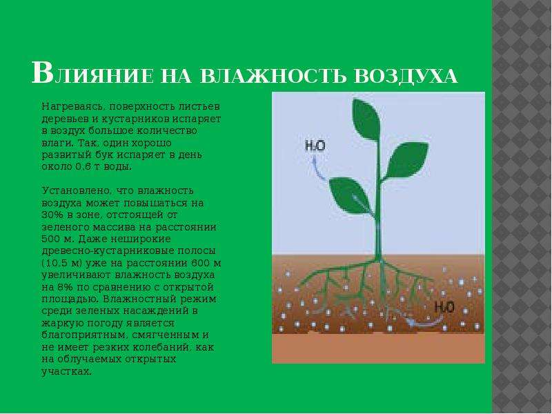 Влияние на влажность воздуха Нагреваясь, поверхность листьев деревьев и кустарников испаряет в возду