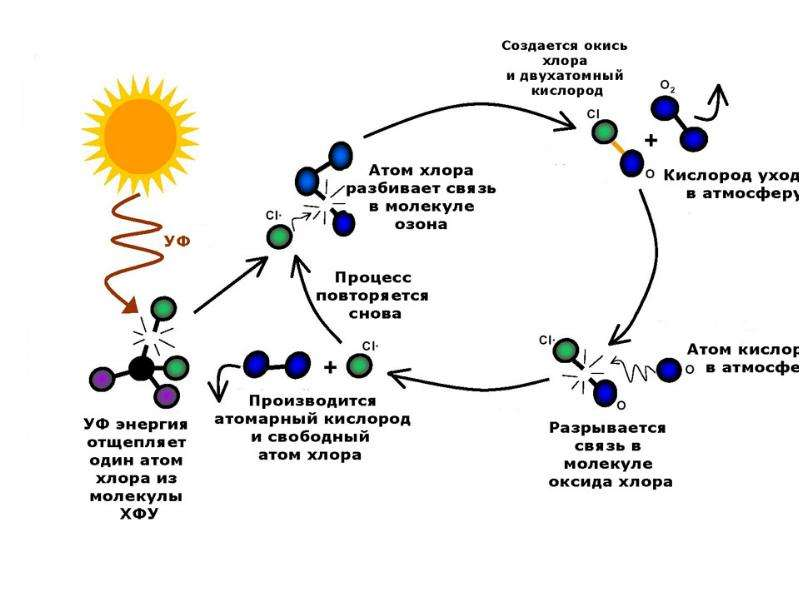 Человек и биосфера. Важнейшие экологические проблемы современности, слайд 10