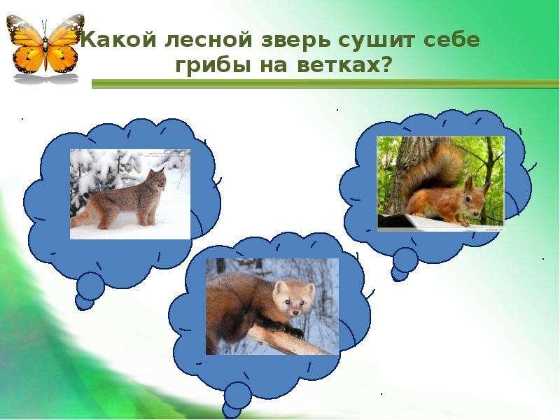 Какой лесной зверь сушит себе грибы на ветках?