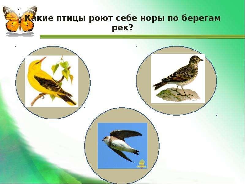 Какие птицы роют себе норы по берегам рек?