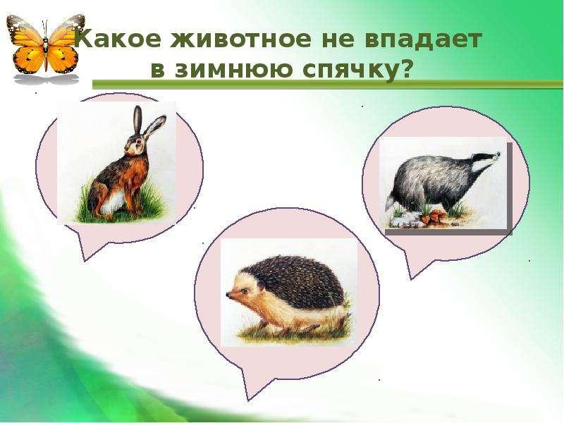 Какое животное не впадает в зимнюю спячку?