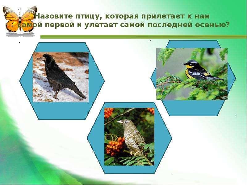 Назовите птицу, которая прилетает к нам самой первой и улетает самой последней осенью?