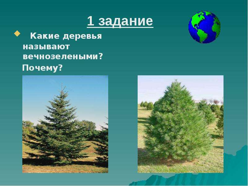 Какие деревья называют вечнозелеными? Какие деревья называют вечнозелеными? Почему?
