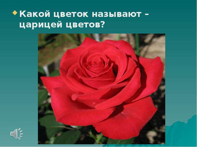 Какой цветок называют – царицей цветов?