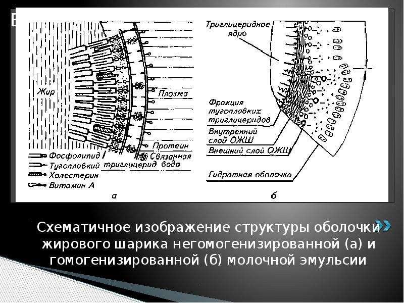 Схематичное изображение структуры оболочки жирового шарика негомогенизированной (а) и гомогенизирова