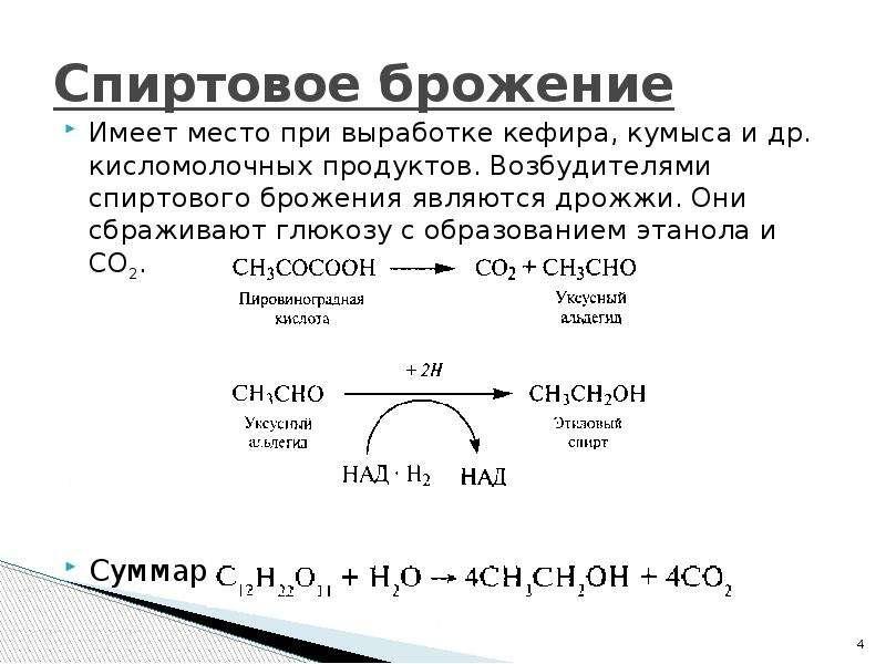 Спиртовое брожение Имеет место при выработке кефира, кумыса и др. кисломолочных продуктов. Возбудите