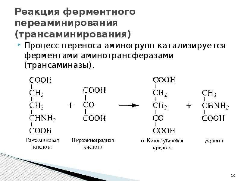 Реакция ферментного переаминирования (трансаминирования) Процесс переноса аминогрупп катализируется