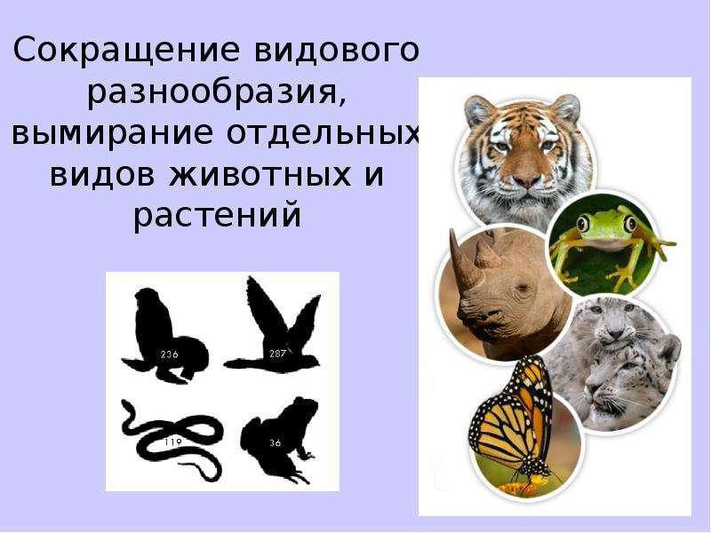 Сокращение видового разнообразия, вымирание отдельных видов животных и растений