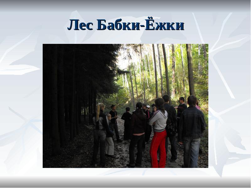 Лес Бабки-Ёжки