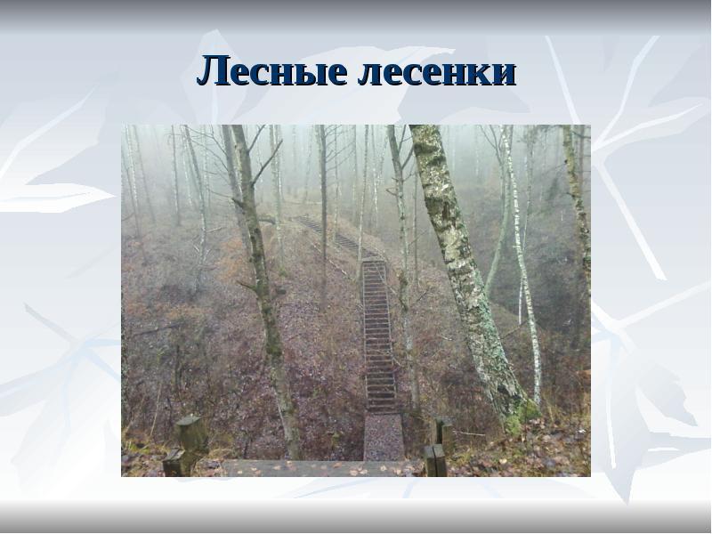 Лесные лесенки