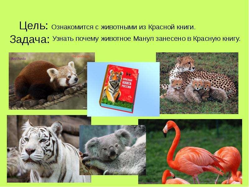 пару фото животных которые занесены в красную книгу немного