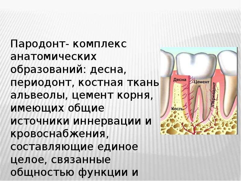 Пародонт- комплекс анатомических образований: десна, периодонт, костная ткань альвеолы, цемент корня