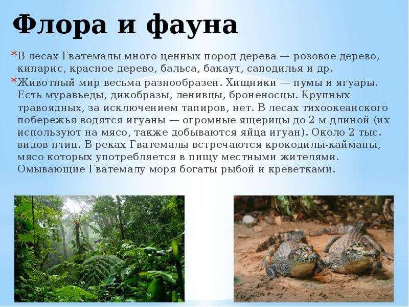 флора россии кратко эти