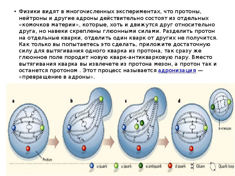 Физики видят в многочисленных экспериментах, что протоны, нейтроны и другие адроны действительно сос