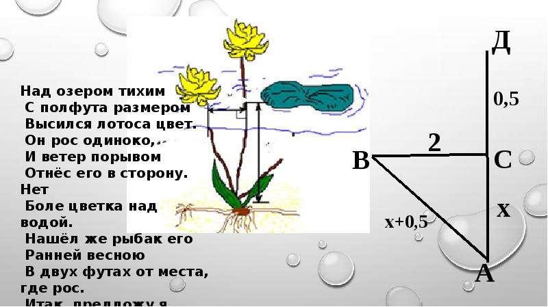 Биография Пифагора. Применение теоремы Пифагора в жизни, слайд 7