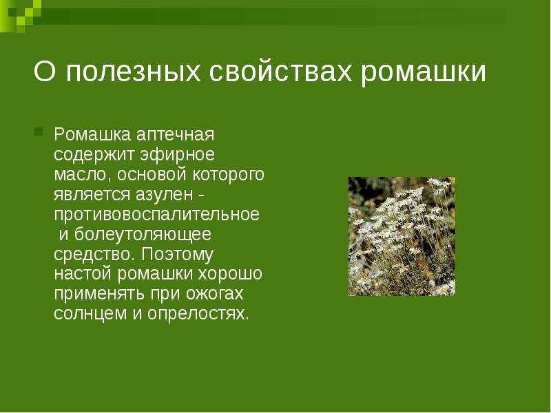 О полезных свойствах ромашки Ромашка аптечная содержит эфирное масло, основой которого является азул