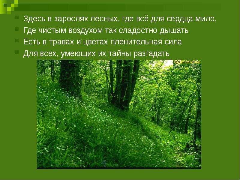 Здесь в зарослях лесных, где всё для сердца мило, Здесь в зарослях лесных, где всё для сердца мило,