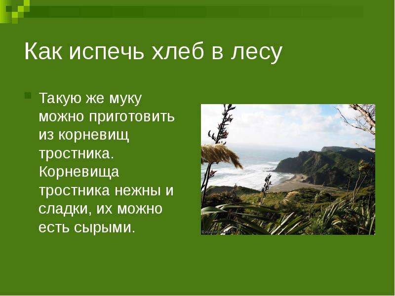 Как испечь хлеб в лесу Такую же муку можно приготовить из корневищ тростника. Корневища тростника не