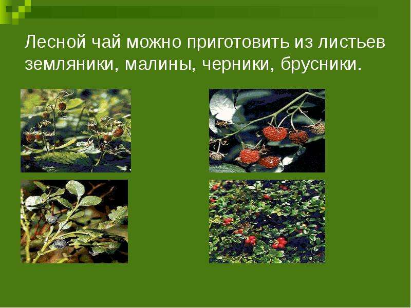 Лесной чай можно приготовить из листьев земляники, малины, черники, брусники.